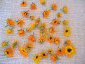 Drying Calendula Flowers