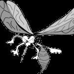 zika and mosquitoes
