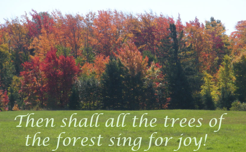 A Song in the Forest