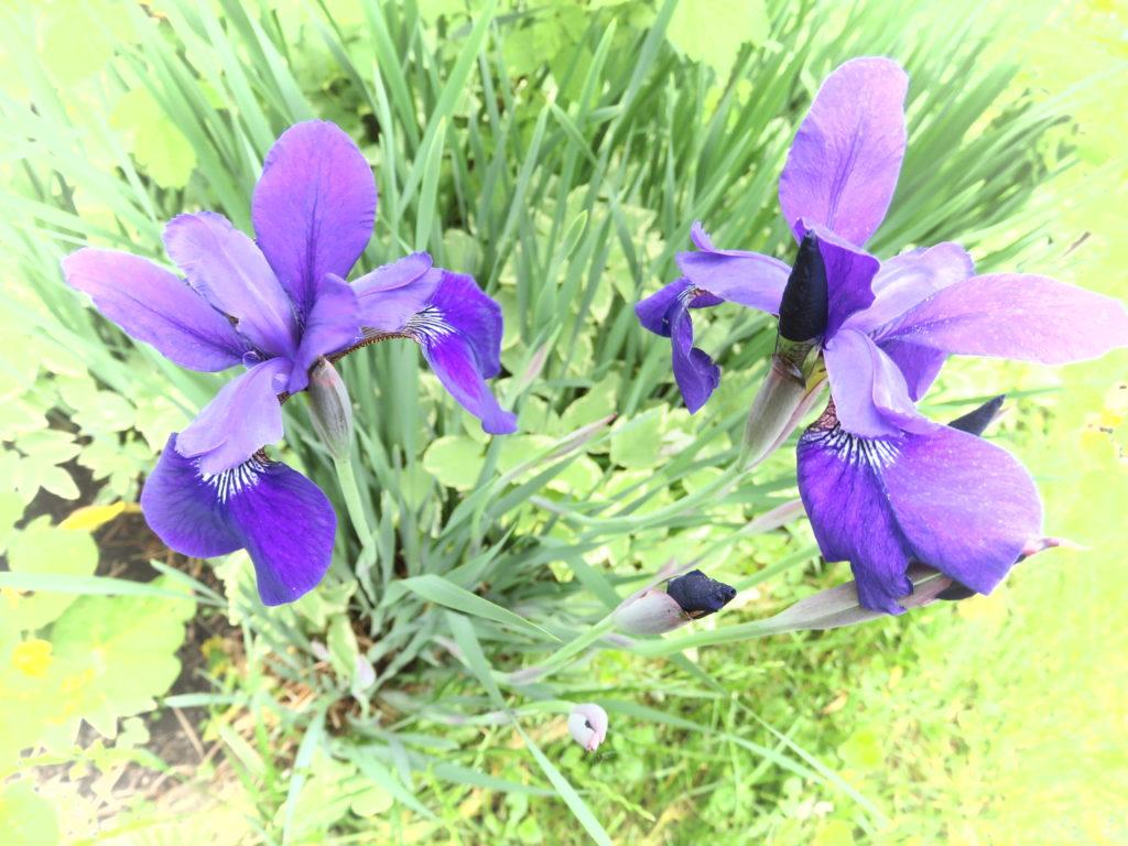 Bloom in my garden
