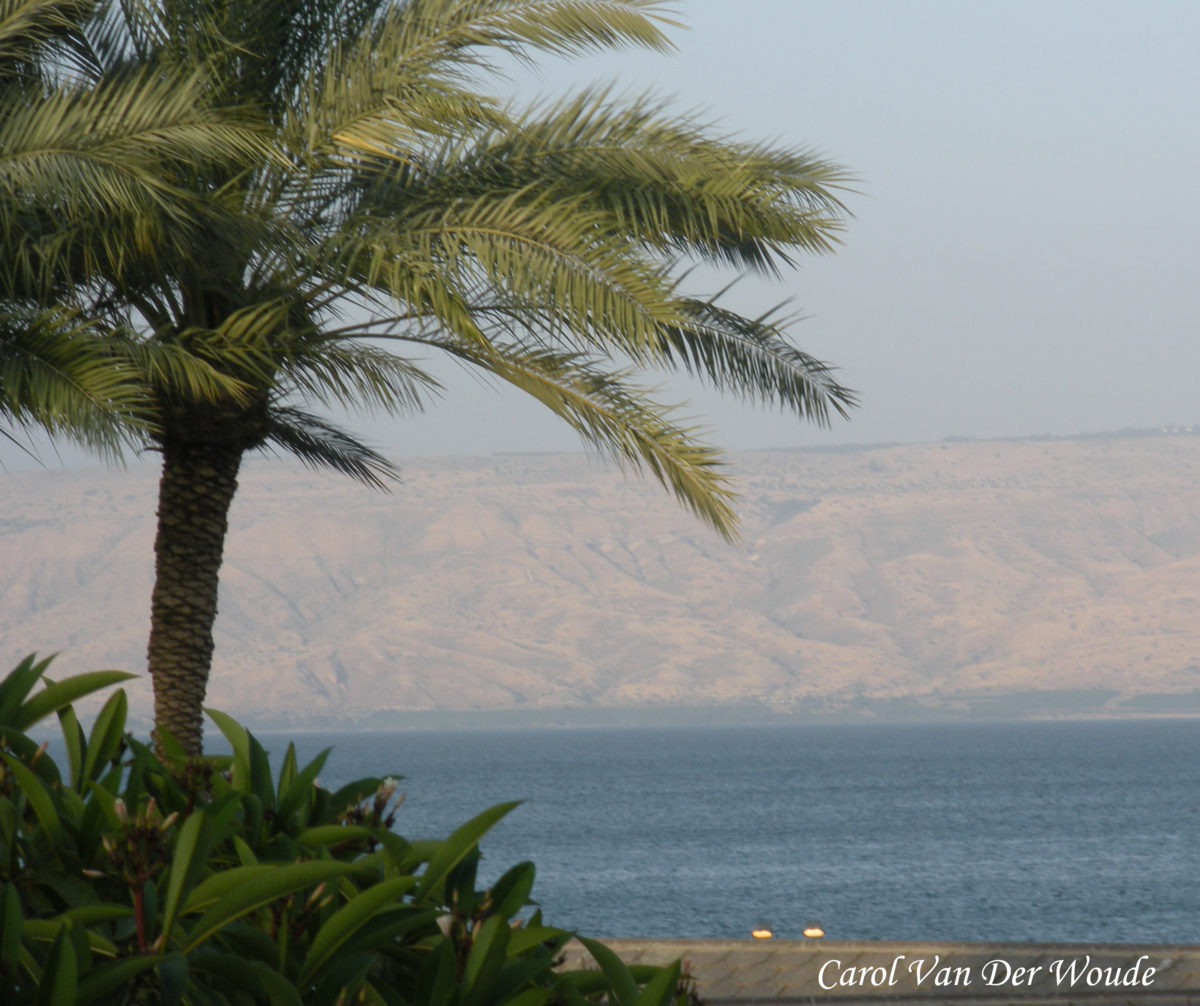 A Storm on the Sea of Galilee and Fleas in the Concentration Camp